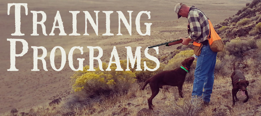 Gundog Training Program