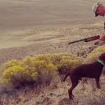 Gundog Training Program